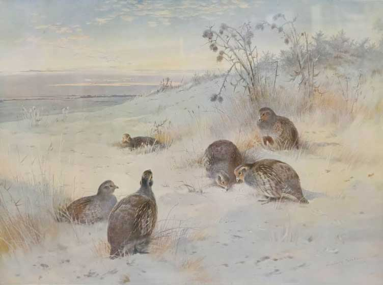 Winter Partridges
