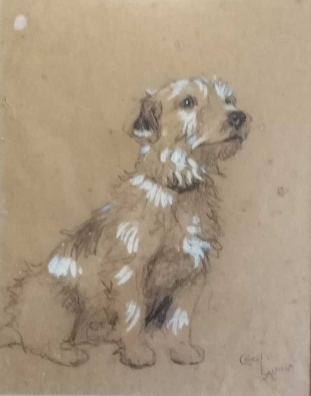 Sketch of a Terrier